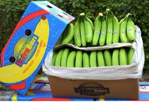Fresh Green Bananas